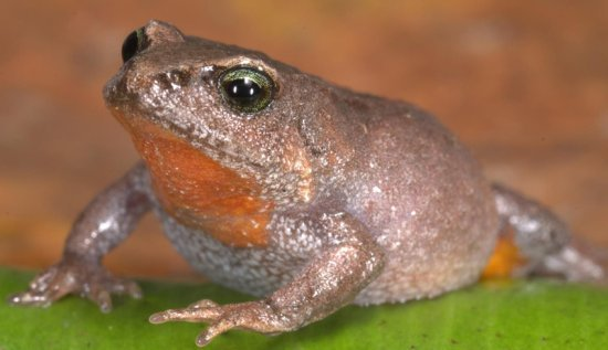 Discover New Species of Frogs
