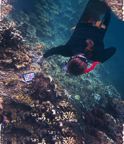 Sweeney dives for giant clams on a research trip to Palau. (Photo/Cynthia Barnett)