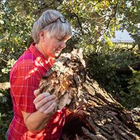 Remembering the Big Bur Oak Tree