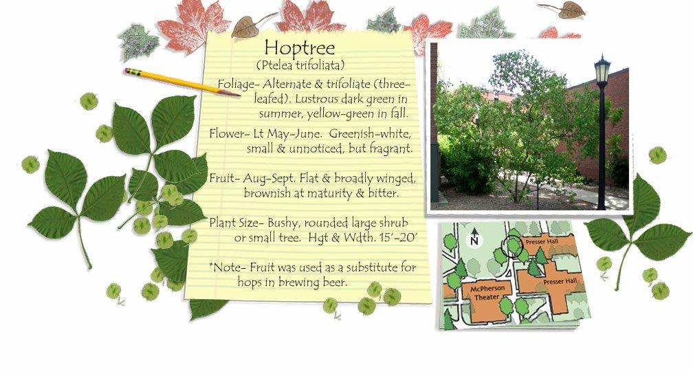Hoptree